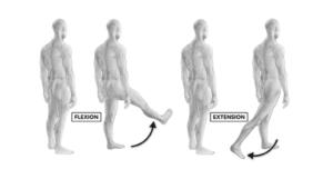 HIP FLEXION/EXTENSION